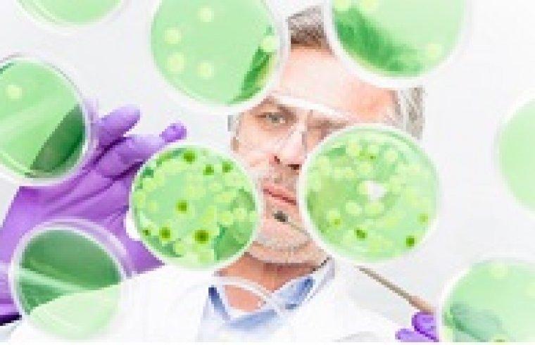 The Detection of Endotoxins Via the LAL Test, the Chromogenic Method